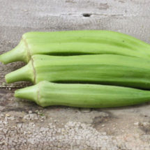 Okra, Clemson Spineless 1