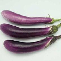 Eggplant, Ping Tung 1