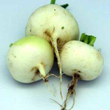 Radish, White Hailstone 1