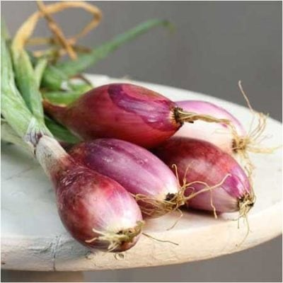 Onion, Red of Florence 1