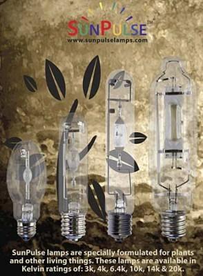 SunPulse Lamps 1